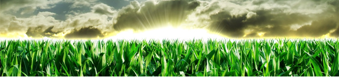 Learn how to trade grain futures